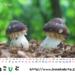 2019年度卓上カレンダー(その1)