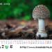 2019年度卓上カレンダー(その2)